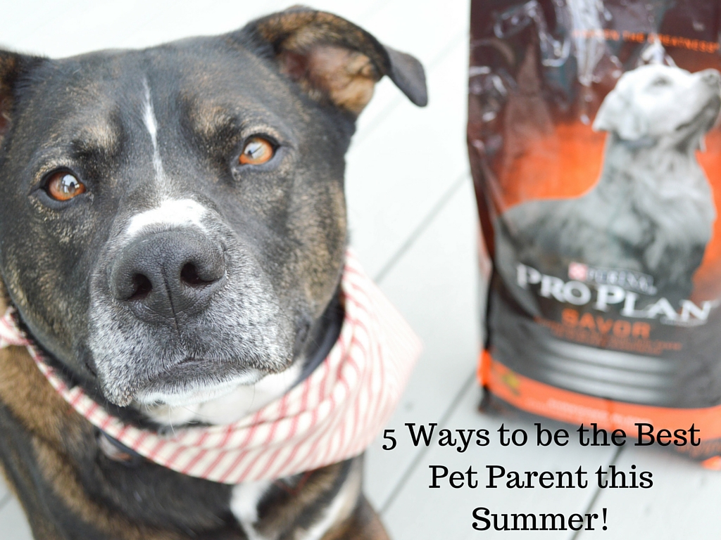 5 Ways to be the Best Pet Parent this Summer featured by popular lifestyle blogger, All Things Lovely